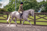 Class 24 Ridden Part Bred & over - Height Connemara, Stallion, Mare or Gelding (3 of 30)