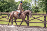 Class 24 Ridden Part Bred & over - Height Connemara, Stallion, Mare or Gelding (1 of 30)