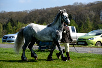 Class 14 - Gelding, any section, 4 to 6 years old