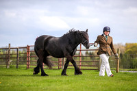 Class 13 - Gelding, any section, 7 years and over